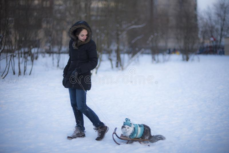 girl rides a cat on a sled in the frost stock photos