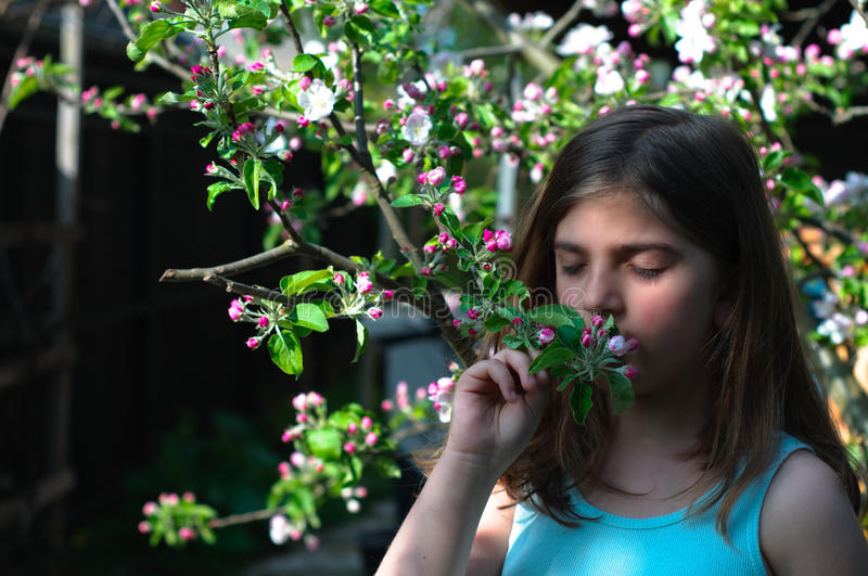 Girl Smelling Blooming Apple Tree stock photos