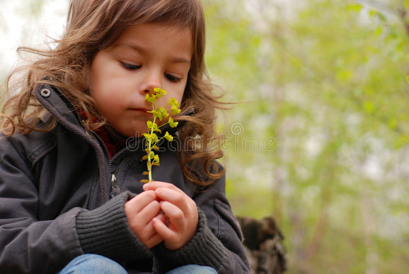 Girl smelling flower stock images