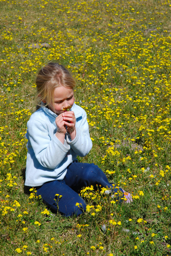 Girl smelling flower. A cute little blond Caucasian girl child smelling a yellow dandelion daisy while sitting in a green flower field in springtime holidays stock photo