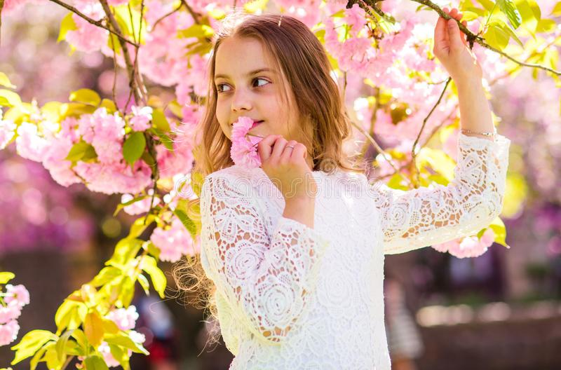 Girl on smiling face standing near sakura flowers, defocused. Girl with long hair outdoor, cherry blossom on background. Peace and tranquility concept. Cute stock images