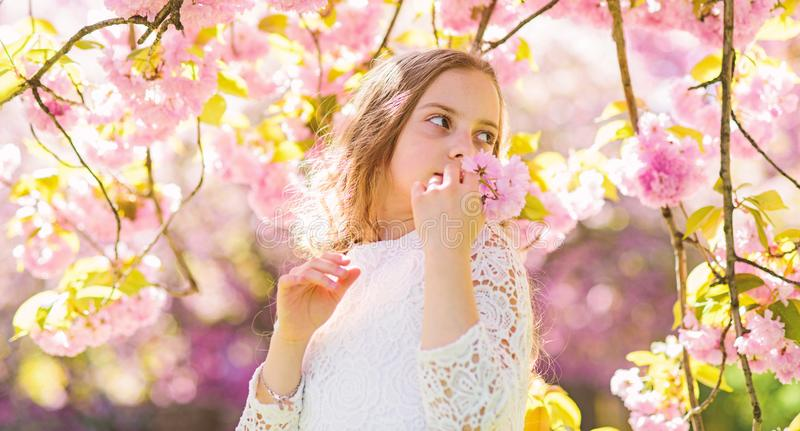 Girl on smiling face standing near sakura flowers, defocused. Girl with long hair outdoor, cherry blossom on background. Cute child enjoy aroma of sakura on royalty free stock photo