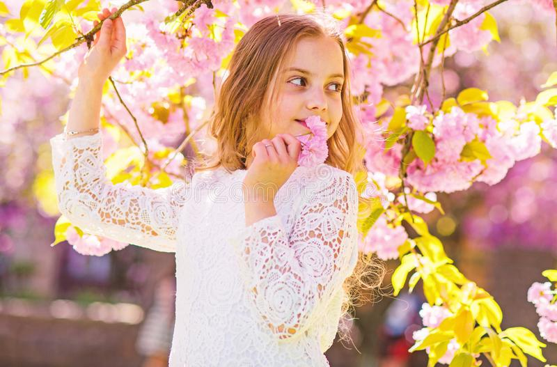 Girl on smiling face standing near sakura flowers, defocused. Girl with long hair outdoor, cherry blossom on background. Peace and tranquility concept. Cute royalty free stock photography