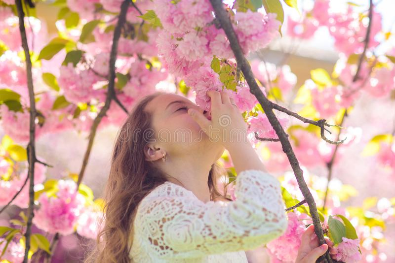 Girl on smiling face standing near sakura flowers, defocused. Perfume and fragrance concept. Cute child enjoy aroma of. Sakura on spring day. Girl with long royalty free stock photography