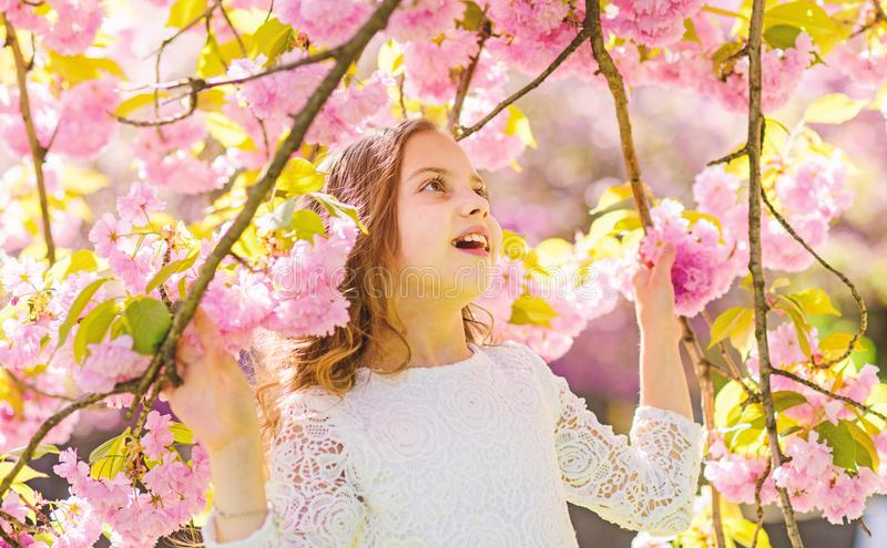 Girl on smiling face standing between sakura branches with flowers, defocused. Cute child enjoy nature on spring day. Spring flowers concept. Girl with long royalty free stock photography