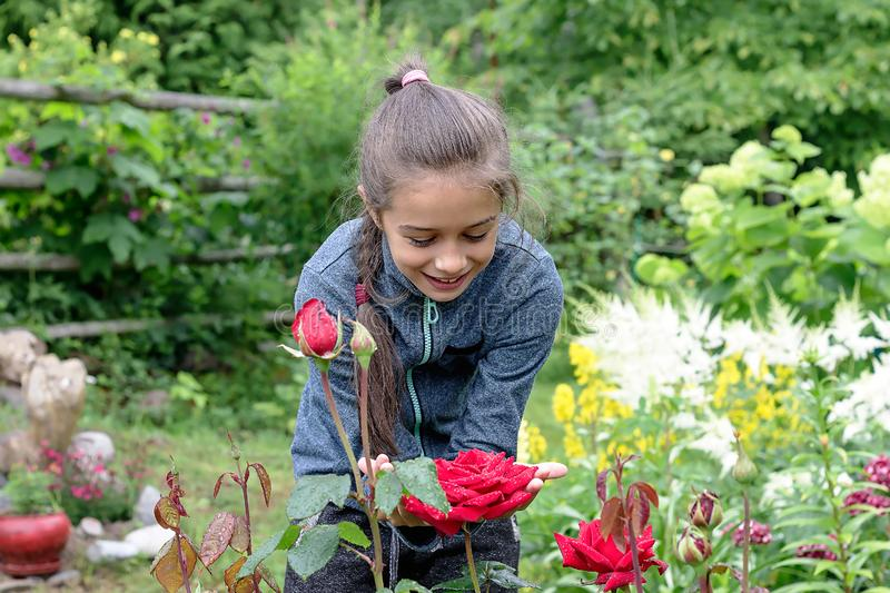 Girl with a smiling face stands on a garden plot and gently touches a rose flower royalty free stock image