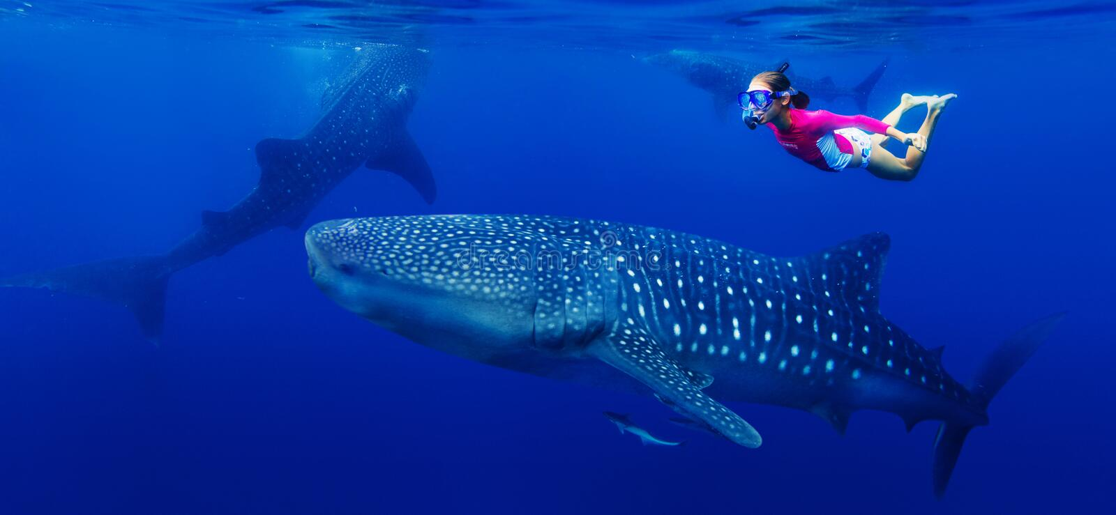 Girl snorkeling with whale shark. Young girl snorkeling with whale shark in the sea, Philippines