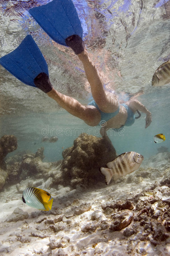 Girl snorkelling in a tropical lagoon - Tahiti. Underwater view of a girl snorkeling in a shallow lagoon in Tahiti in French Polynesia stock photos