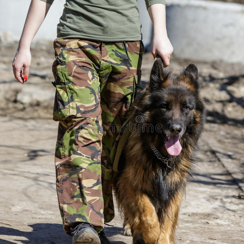 Girl soldier with a dog royalty free stock photography