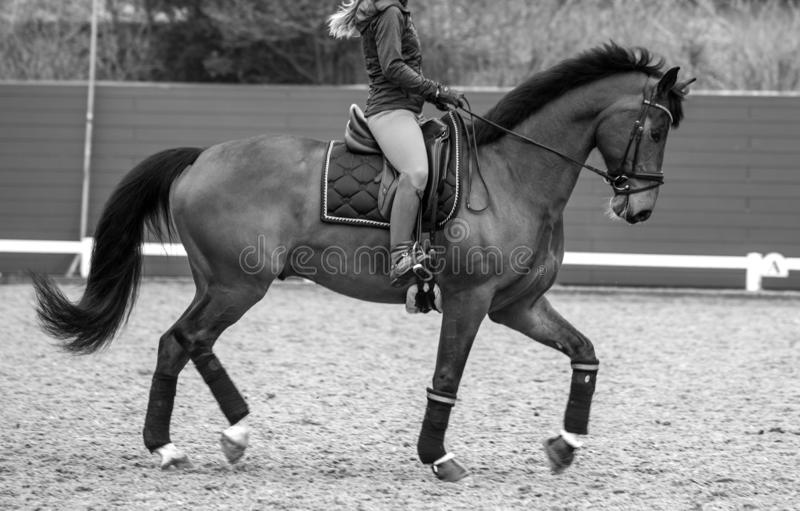 Girl on a sports horse.  royalty free stock photos
