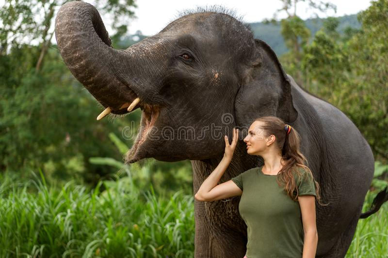 Girl standing near an elephant in the jungle stock photo