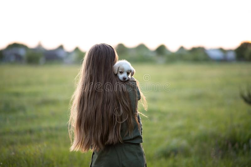 A girl stands with his back and holds a labrador puppy. At sunset in the meadow in spring. Friendship, happiness. A girl stands with his back and holds a royalty free stock photo