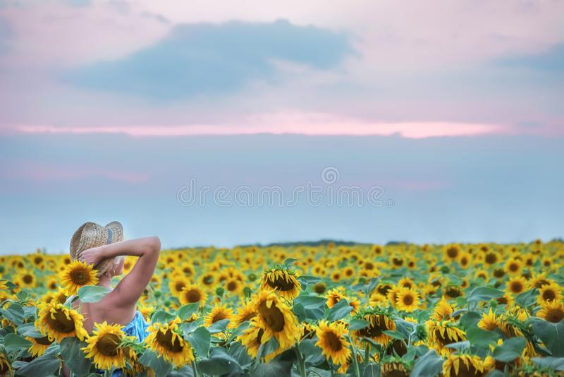 A girl in a straw hat in the field of sunflowers. stock image