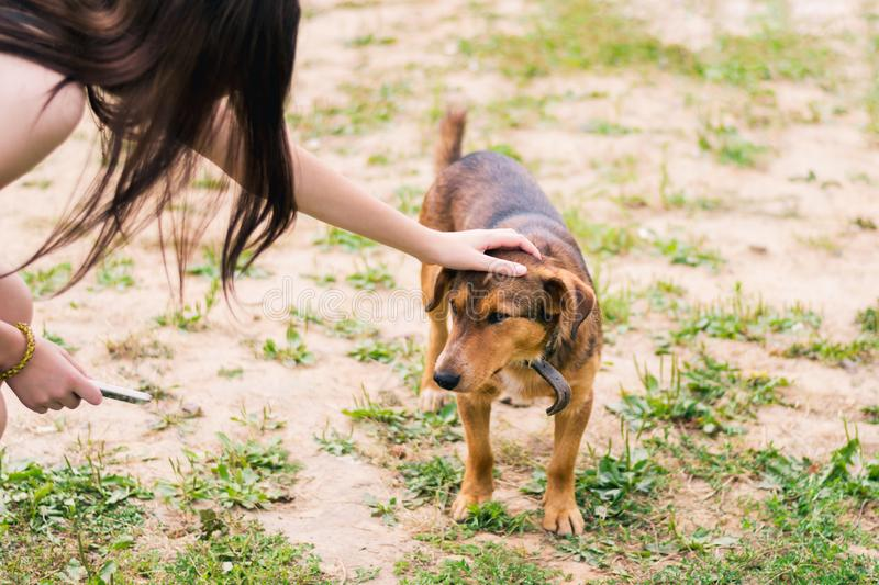 Girl strokes the head of brown smooth-haired dog in a collar royalty free stock photos