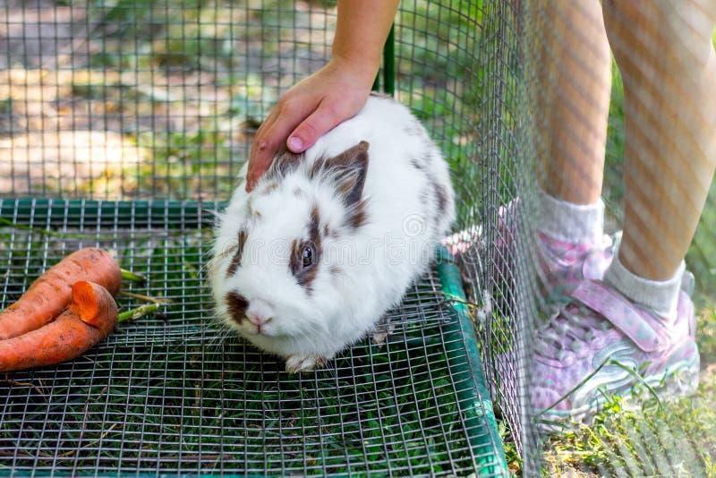 The girl strokes a little white fluffy rabbit_. The girl strokes a little white fluffy rabbit stock photos