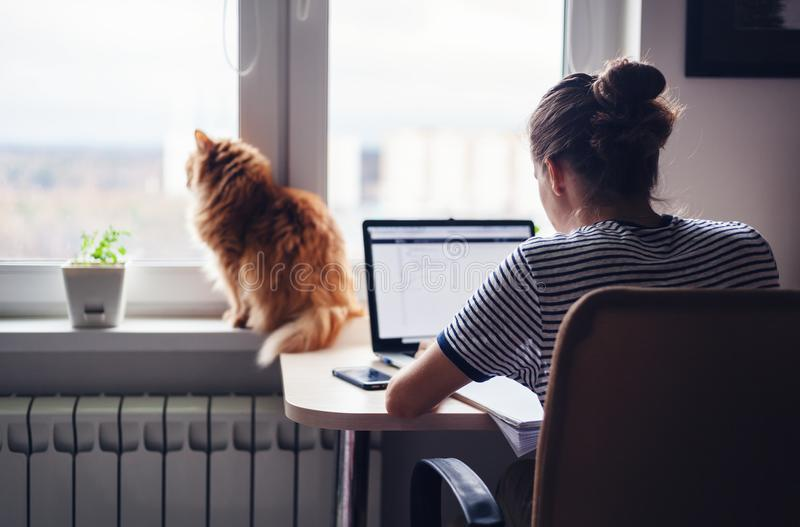 Girl student freelancer working at home on a task, the cat is si royalty free stock photos