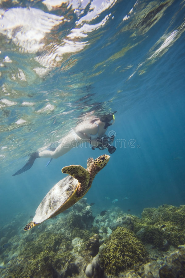 Girl swimming with turtle. Unforgettable moment: flying turtle in rays of light stock photography