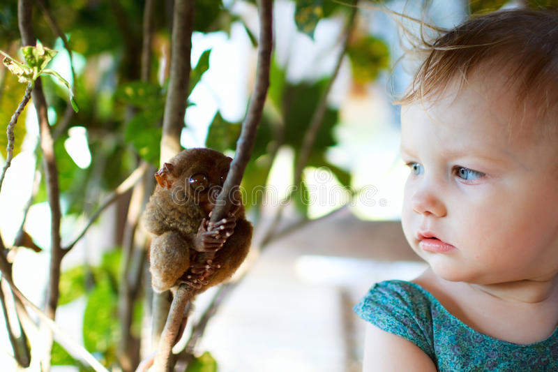 Girl and tarsier. Cute little girl looking at tarsier smallest primate royalty free stock image