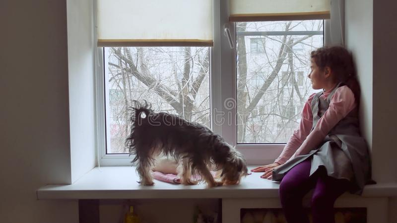 Girl teen and pets cat and pet dog a looking out window, cat sleeps royalty free stock image