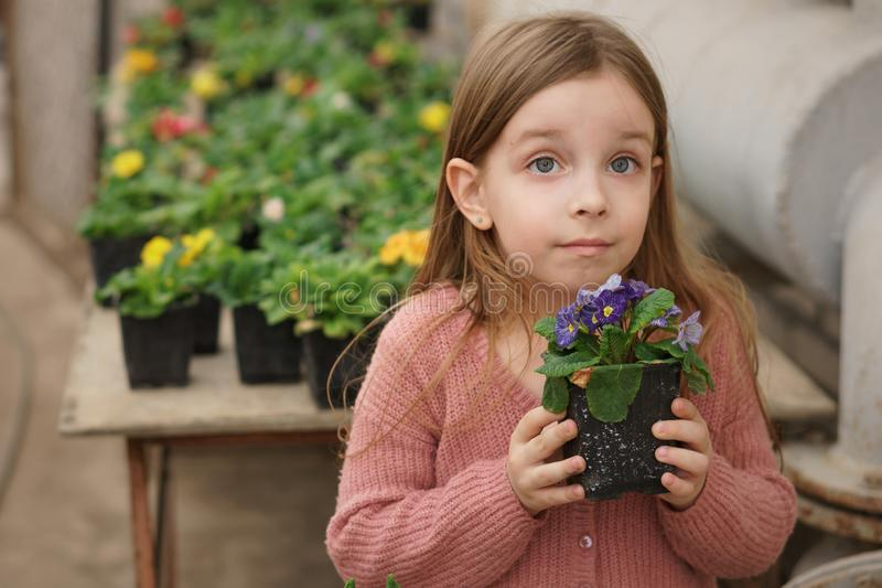 Girl on tour of greenhouse. Cheerful schoolchild holding pot with blooming plant in hands in orangery. Excursion in greenhouse. Summer girl fashion. Happy royalty free stock photos