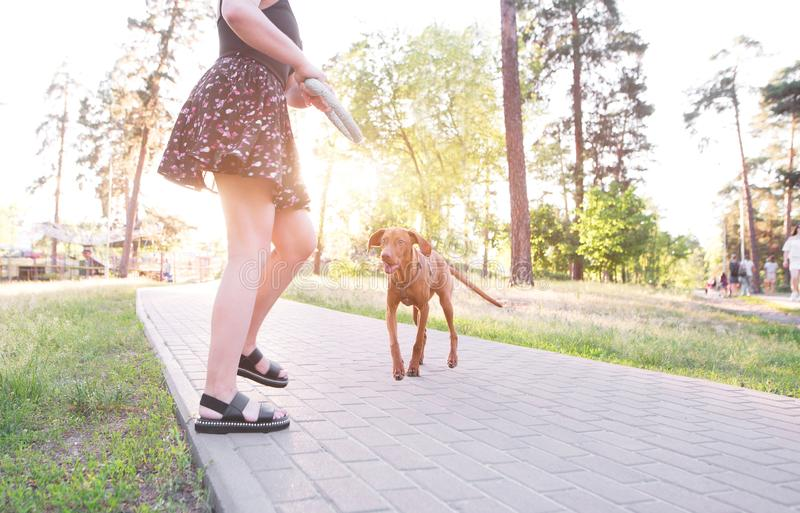 Girl with a toy in her hands plays with a beautiful dog on the alley in the park royalty free stock photography