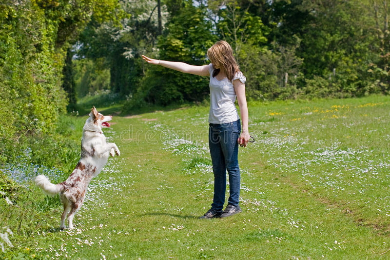 Girl training her dog stock photo
