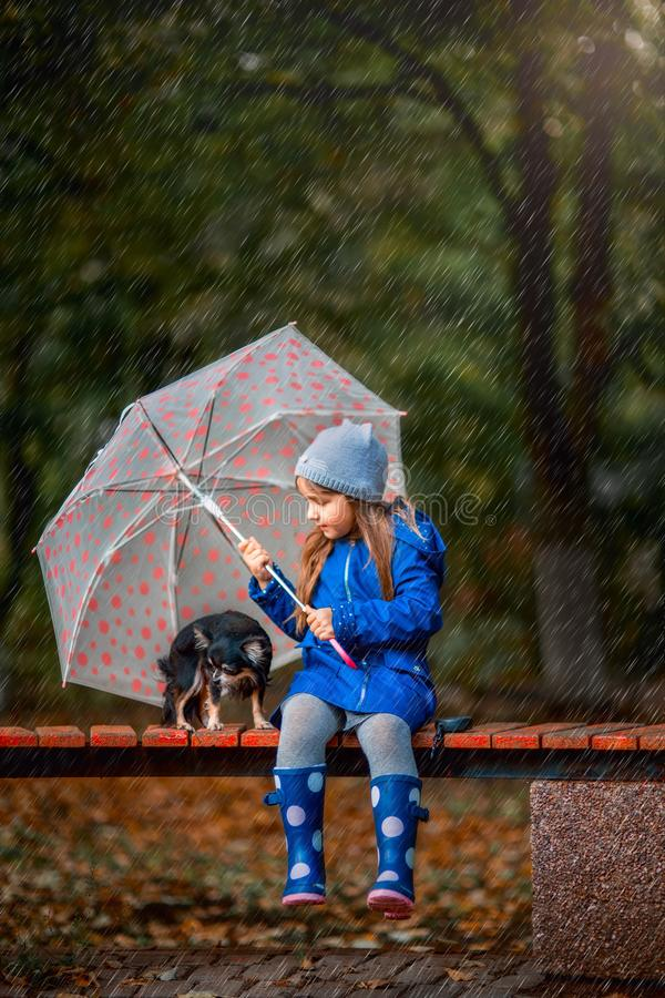 Girl with Chihuahua dog in autumn park royalty free stock photography