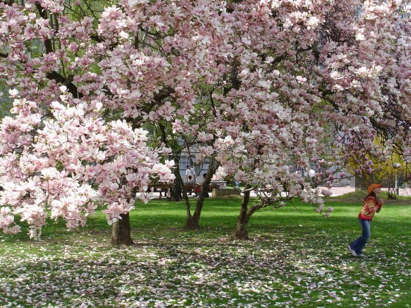 Girl under magnolia tree stock image
