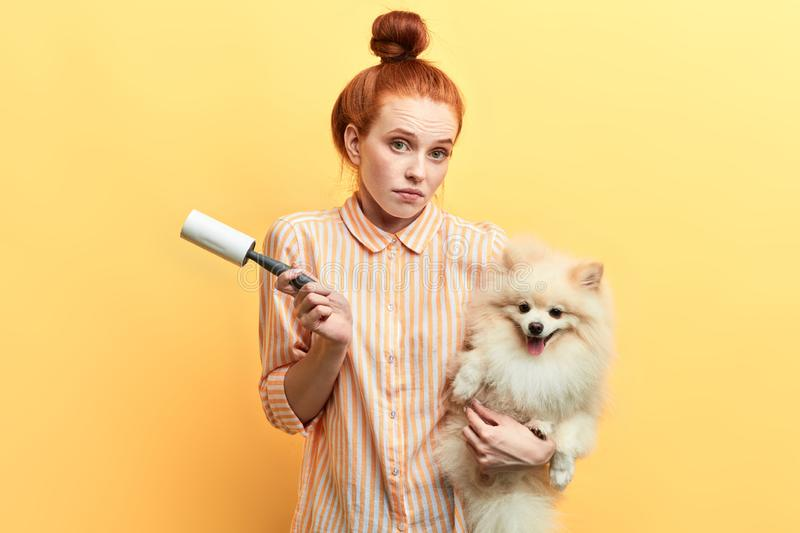 Girl is unhappy as her dog is ill. Woman holding sick pet and roller and looking at the camera, removing excess hair, seeding hair stock photos