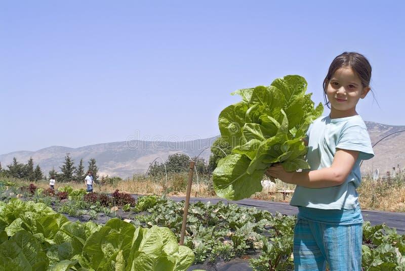 Download Girl in vegetebale garden stock photo. Image of chlorophyll - 4961758