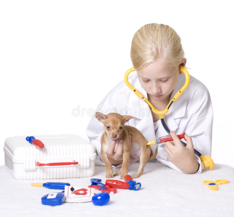 Girl Veterinarian Giving Puppy a Shot in Behind royalty free stock photography