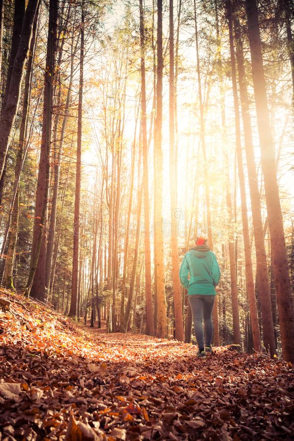 Hiking in the forest, autumn time. Girl is walking in autumnal forest, colorful leaves and sunbeam royalty free stock photography