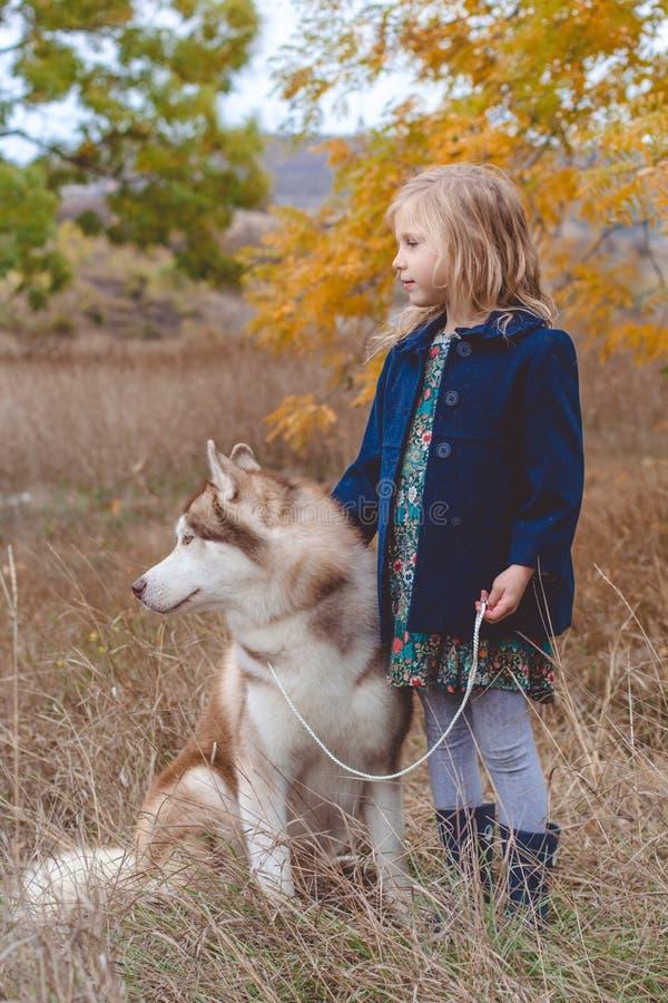 Girl is walking with cute husky dog stock photos