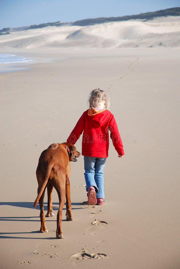 Girl walking dog stock images