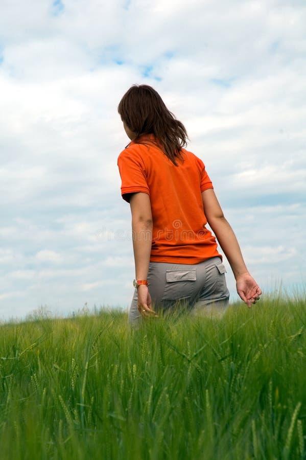 Girl walking in field of green wheat stock photo