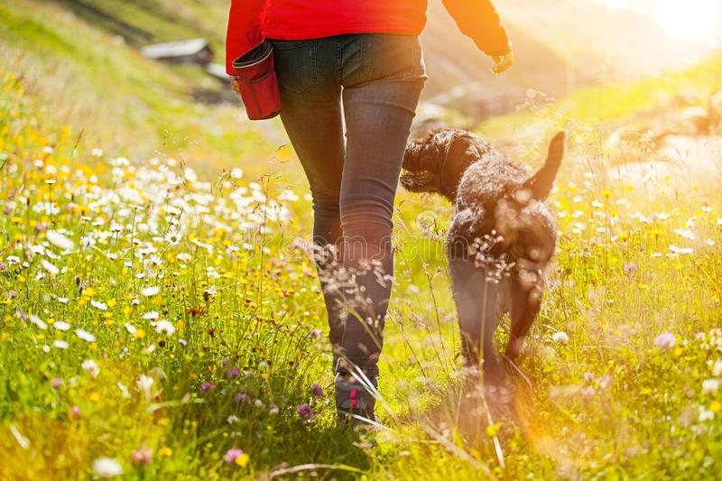 Girl walking with her dog on meadow. stock photo