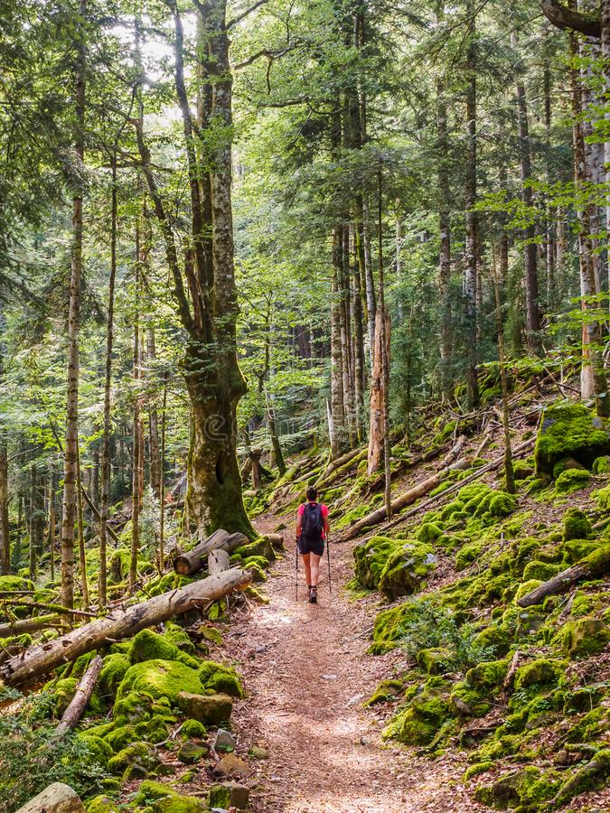 Girl walking on a path between the trees in the Ordesa y Monte Perdido National Park royalty free stock images