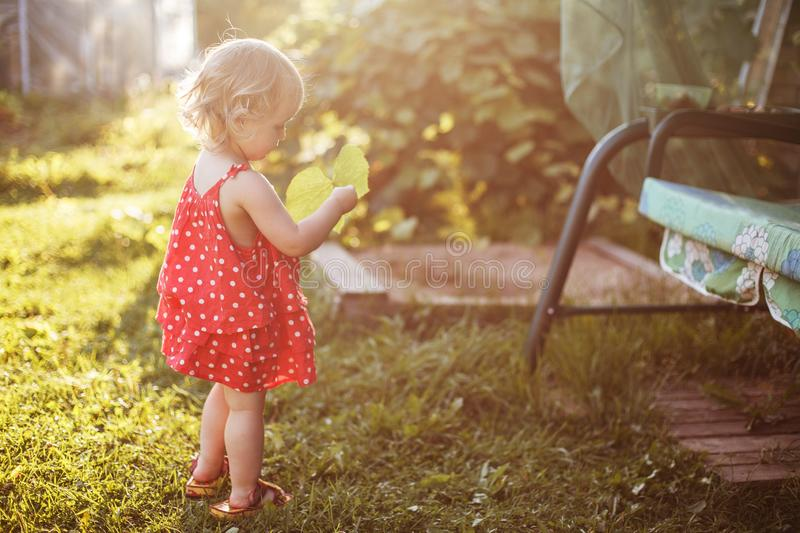 The girl walks in the yard with a leaf stock photos
