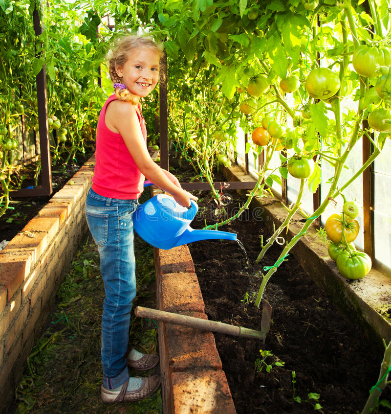 Girl watering the garden stock photo