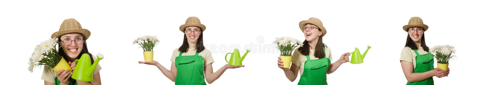 The girl watering plants on white royalty free stock image