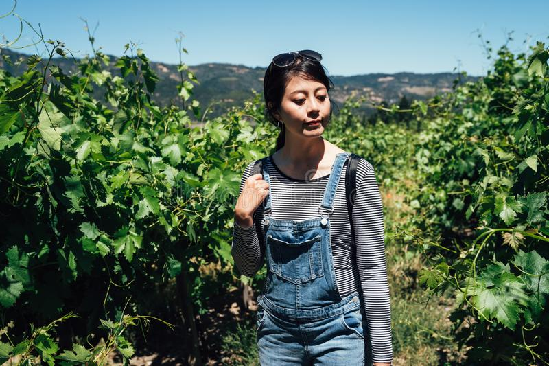 Girl wearing sunglasses standing in grapevine. Vineyard winery tourist woman experience grape picking around in nature green plants under sunshine. Harvest royalty free stock images