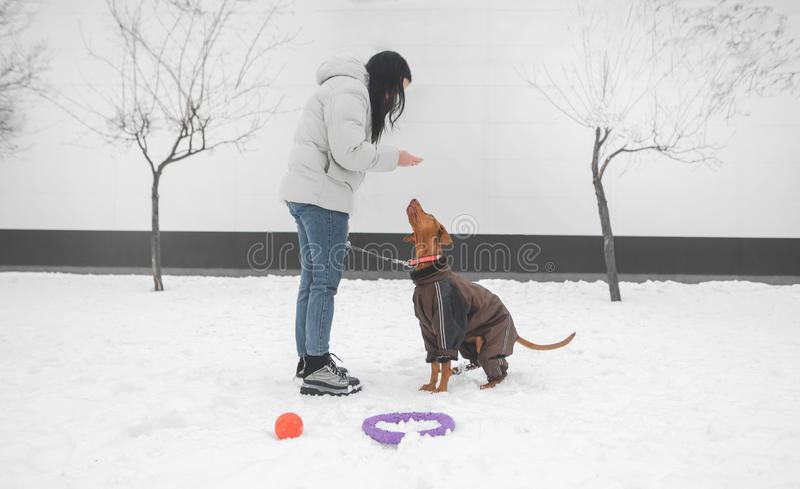 Girl wearing winter clothes on a dog for a leash, walking in the winter through the street royalty free stock photos