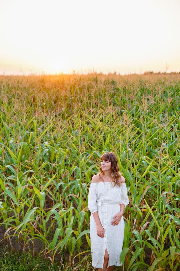 Girl in white dress . Woman in cornfield, place for text. Spike and girl in field. Late summer and early autumn. August. Girl in white dress with spikelets royalty free stock photography