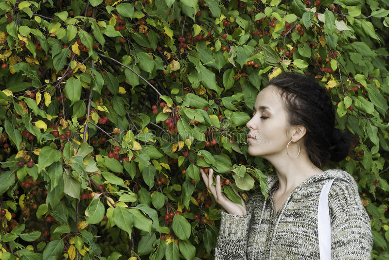 Download Girl and wild apple tree stock photo. Image of beautiful - 15423364