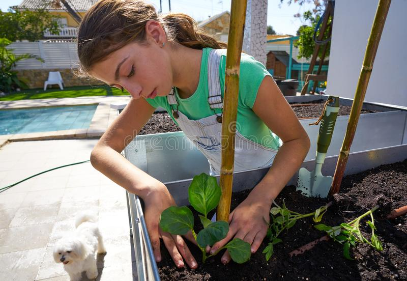 Girl working in orchard raised bed garden. Girl working in orchard raised bed urban garden royalty free stock photos