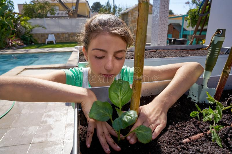 Girl working in orchard raised bed garden. Girl working in orchard raised bed urban garden stock photo