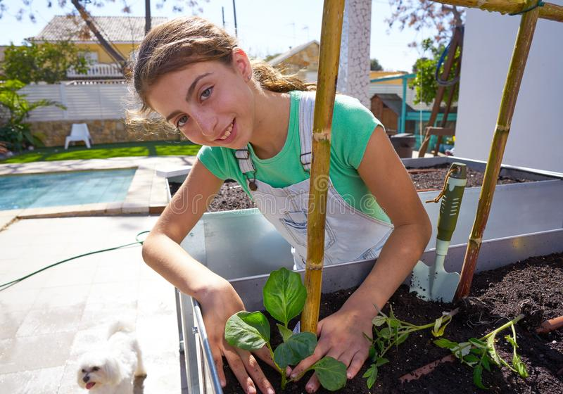 Girl working in orchard raised bed garden. Girl working in orchard raised bed urban garden royalty free stock photo