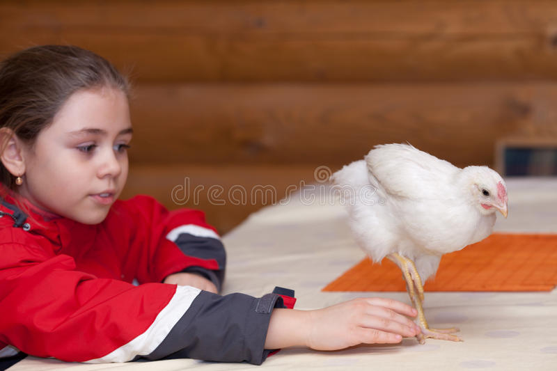 Girl and young hen stock photography
