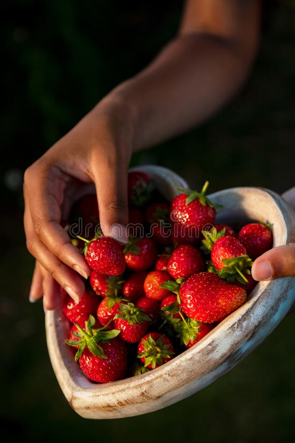 Young Woman Hands Holding Heart Shaped Bowl of Strawberries. Girl or young woman hands holding a wooden heart shaped bowl of freshly picked red strawberries royalty free stock photo