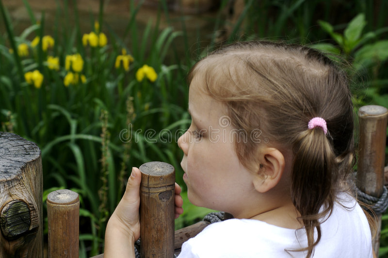 Download Girl at the Zoo stock image. Image of outdoor, young, curious - 5528841